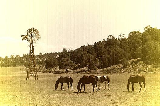 Horses by Paul Van Baardwijk