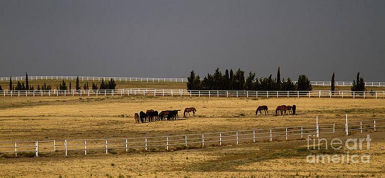Horses by Zafer GUDER