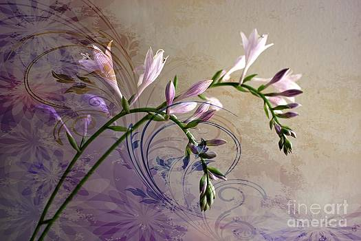 Hosta Soft Delicate And Elegant by Judy Palkimas