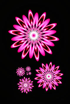 Hot Pink Daisies on Black by Faye Giblin