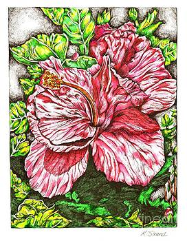 Hot Pink Hibiscus Flower by Karen Sirard