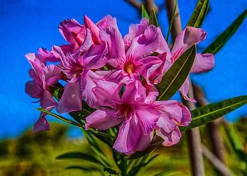 Omaste Witkowski - Hot Pink Hibiscus