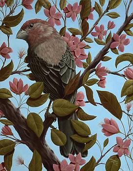 House Finch by Rick Bainbridge
