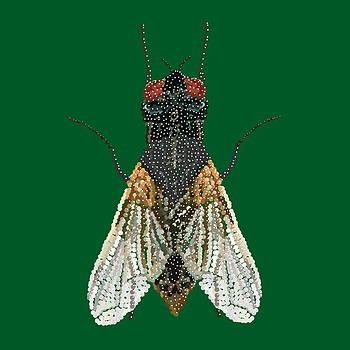House Fly in Green by R  Allen Swezey