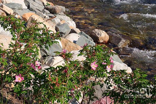 Charles Kozierok - How Rose Creek Gets Its Name