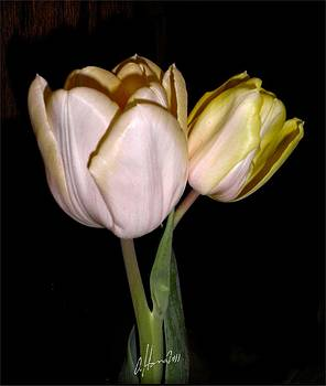 How Tulips Unfold No. 1 by Tonie Cook