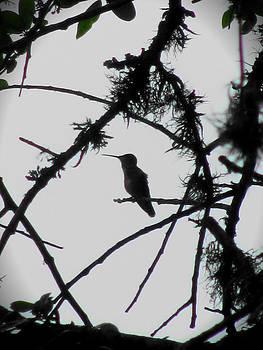 Humminbird II by Lisa Waggoner