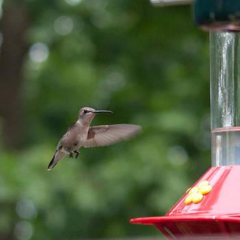 Humming Bird by Adrienne Franklin