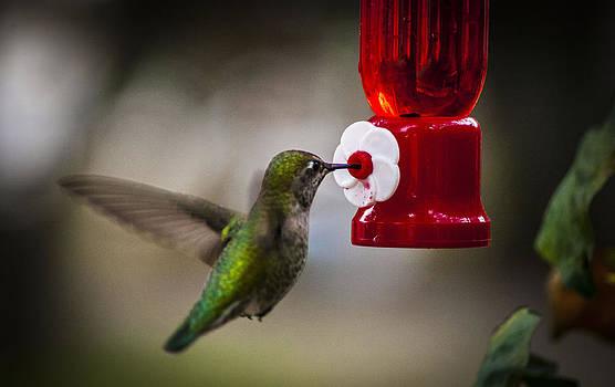 Humming Bird by Rod Mathis