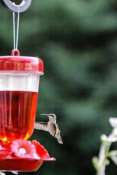 Hummingbird 2 by Oleg Koryagin