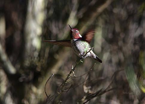 Xueling Zou - Hummingbird 2