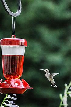 Hummingbird 3 by Oleg Koryagin