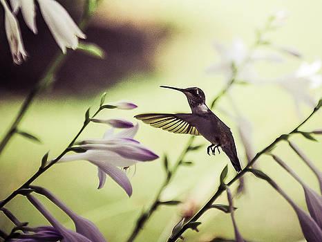 Hummingbird and flowers 2 by Oleg Koryagin