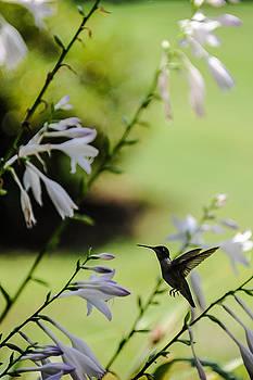 Hummingbird and flowers 3 by Oleg Koryagin