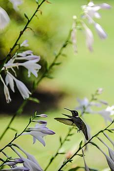 Hummingbird and flowers 4 by Oleg Koryagin