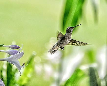 Hummingbird and flowers 5 by Oleg Koryagin