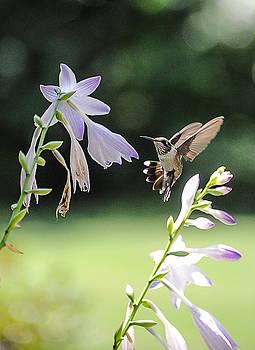 Hummingbird and flowers  by Oleg Koryagin
