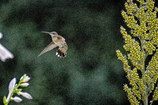 Hummingbird and yellow flower by Oleg Koryagin