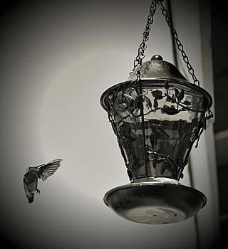 Cindy Nunn - Hummingbird BW 2