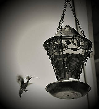 Cindy Nunn - Hummingbird BW 3