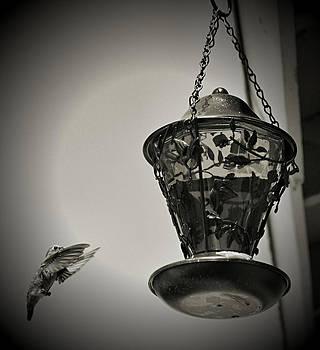 Cindy Nunn - Hummingbird BW 4