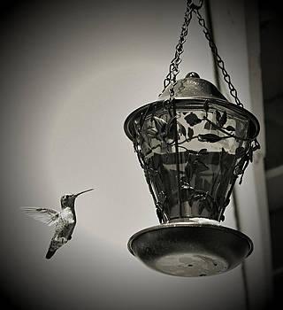 Cindy Nunn - Hummingbird BW 5