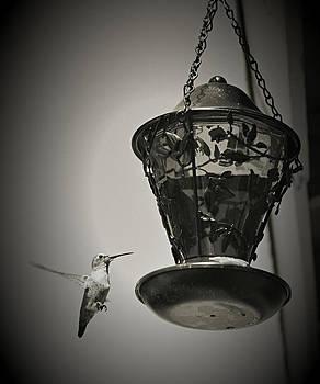 Cindy Nunn - Hummingbird BW 6