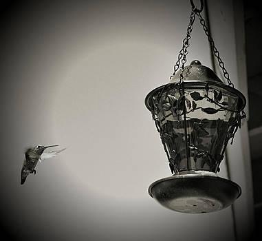 Cindy Nunn - Hummingbird BW 7