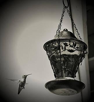 Cindy Nunn - Hummingbird BW 8