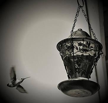 Cindy Nunn - Hummingbird BW 9