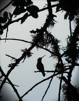 Hummingbird by Lisa Waggoner