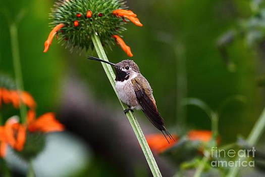 James Brunker - Hummingbird Happiness