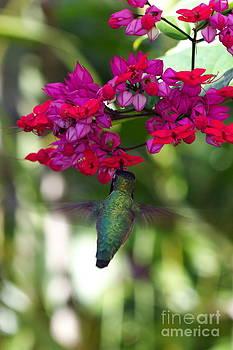 Hummingbird III by Pamela Gail Torres
