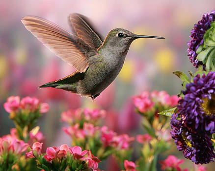 Hummingbird in colorful garden by William Lee