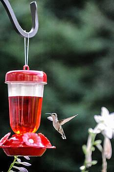 Hummingbird by Oleg Koryagin