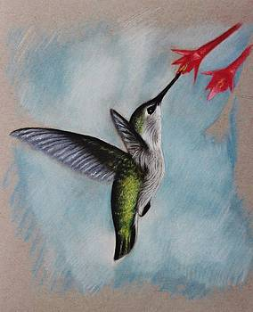 Hummingbird by Samantha Howell
