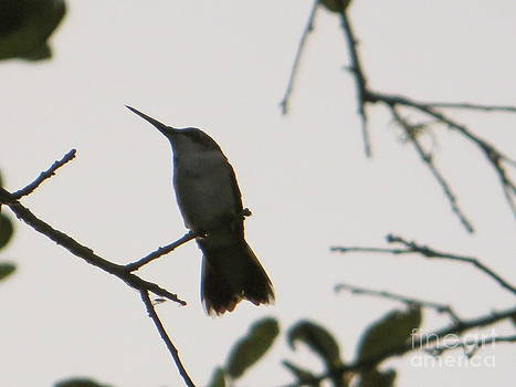Hummingbird Silhouette 2 by Joy Hardee