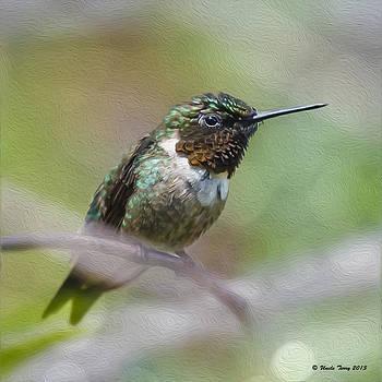 Hummingbird by Terry Jacumin