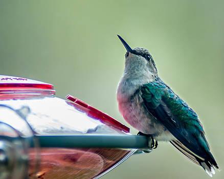 Hummingbird by Todd Soderstrom