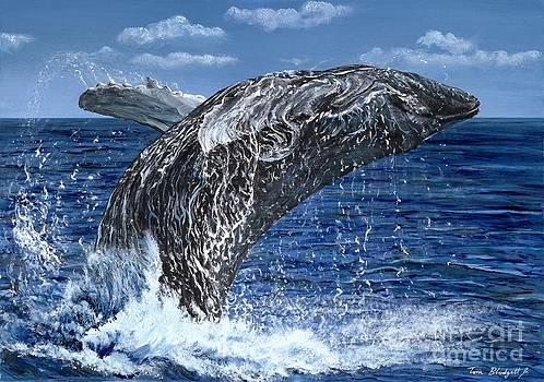 Humpback Whale by Tom Blodgett Jr