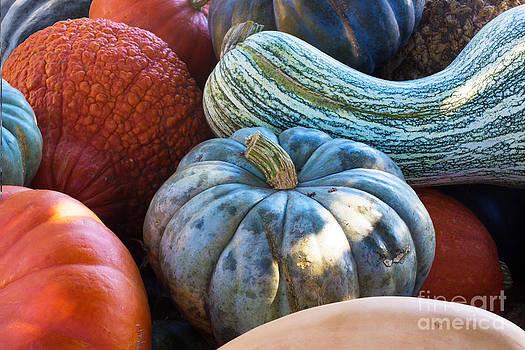 Barbara McMahon - Humungous Edible Gourds