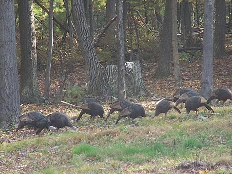 Hungry Turkeys by Lila Mattison