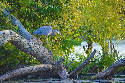 Hunter by Jim Wilcox