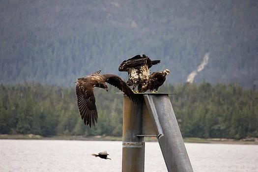 Hunting Birds by Timothy Latta