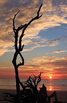 Hunting Island South Carolina Coast by Michael Weeks