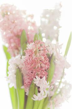 Hyacinth by Mary Carver