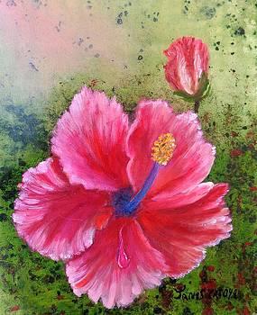 Hybiscus by Janis  Tafoya