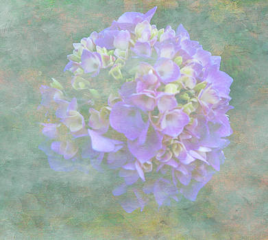 Hydrangea - AFTER by Laurie Poetschke