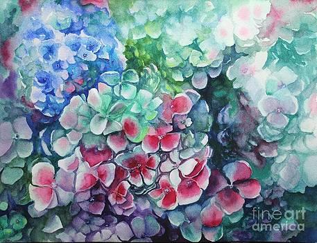 Hydrangea blooms by Georgia Pistolis