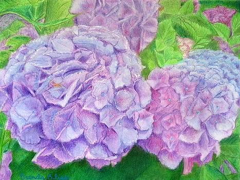 Hydrangea by Brenda Bliss